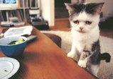 まこという名の不思議顔の猫