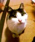 見上げるぽち猫February 28, 2006.jpg