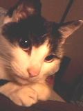 セピア猫ぽちApril 23, 2007.jpg