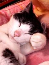うにゅ♪ぽち猫071202_2332~002.jpg