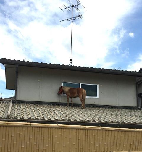 馬西日本1
