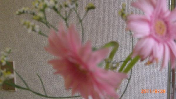 上原美優ちゃんに捧げた花