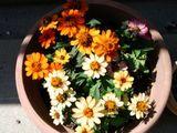 色が薄くなった花