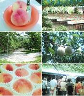 夏の桃狩り