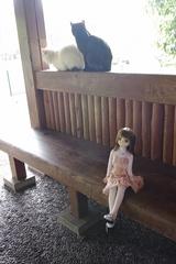 さあらさんVS猫_001