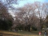 29 Hanami at Saginuma park 2
