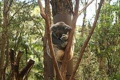 Currumbin Wildlife Sanctuary 6