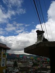 San Cristobal 3