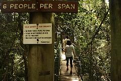 Lamington National Park 1