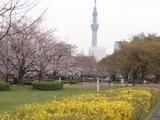 タワー桜2