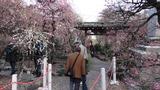 香取神社梅屋敷3