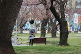 桜ジャンプ2
