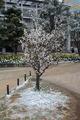 錦糸町の雪2