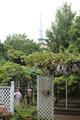 園からタワー