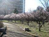 亀戸中央公園4