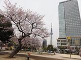 タワー桜3
