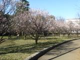 亀戸中央公園3