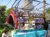 藤祭り11