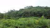 笹川流れ9