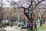 桜ジャンプ