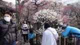香取神社梅屋敷