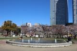 錦糸公園桜5