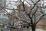 錦糸町の雪6