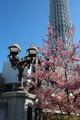 河津桜タワー