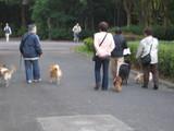 わんこ散歩