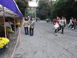 明治神宮菊