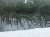 新潟雪20