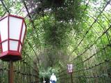 萩のトンネル2