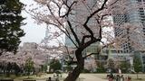 桜錦糸公園