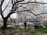 猿江公園2
