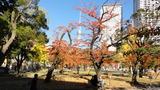 紅葉スカイツリー