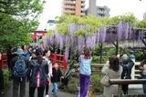 亀戸藤祭り2