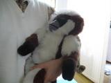 サルだっこ