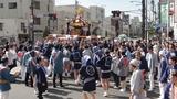 猿江神社神輿7