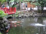 富岡八幡池