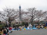 隅田川花見4