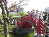 藤祭り13