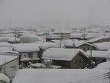 新潟雪33