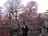 香取神社梅屋敷2