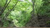 林道ツーリング3