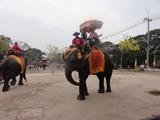 アユタヤ象
