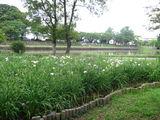 水元公園11