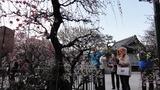 香取神社梅屋敷4