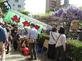 藤祭り18