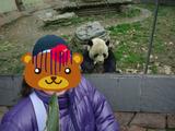 クマママパンダ