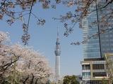 タワー桜4